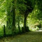 Landscape-Photography-Marley-Park-walkway