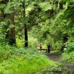 Landscape-Photography-Radisson-SAS-Cavan-Forest