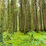 Landscape photography Radisson Cavan Trees